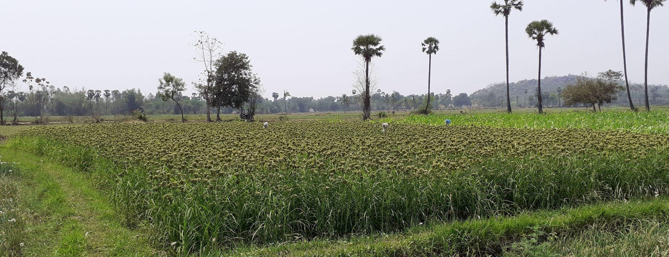 Adharsa Enabavi FPO